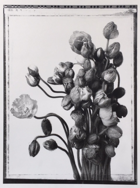 Poppies<br> Silver print, 51 x 41 cm<br> Private collection