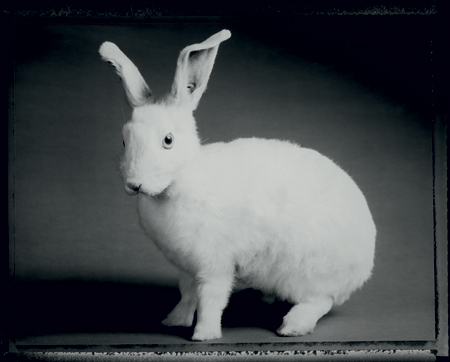 Lapin Blanc<br> Silver gelatin print, 50,5 x 61 cm<br> Private collection